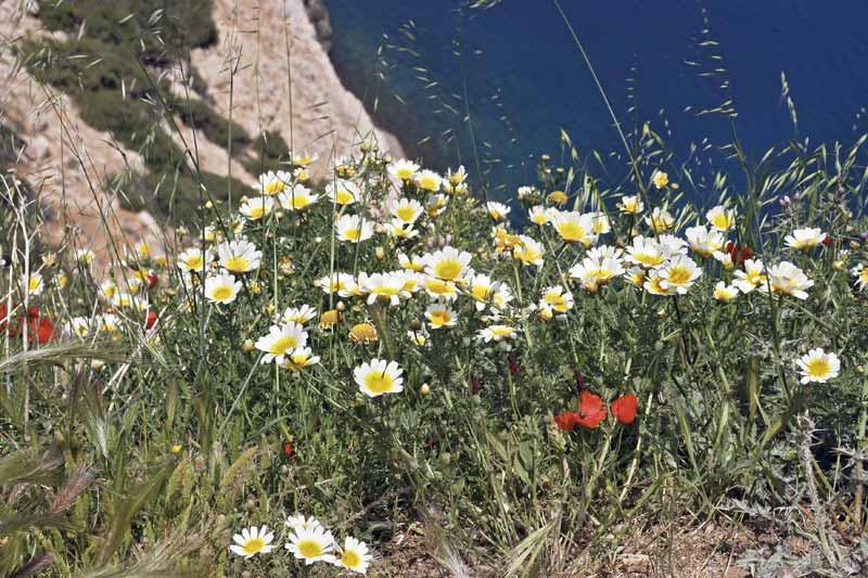 Frühling auf Kreta