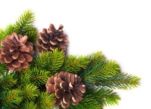 tannenzapfen-weihnachts-gruen
